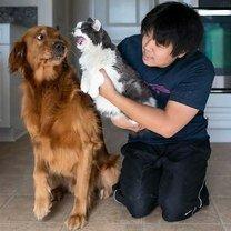 Фото приколы Как общаются кошки и собаки (40 фото)