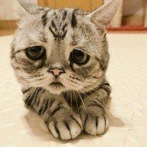 Самые грустные кошачьи глаза