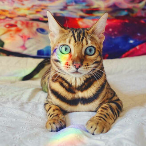 Кошка-путешественница смешных фото приколов