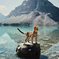 Фото приколы Кошка-путешественница (36 фото)