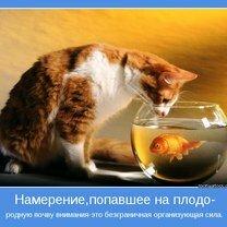 Фото приколы Люби без причины!