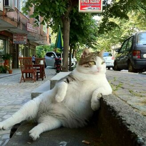 Фото приколы Странно сидящие коты (17 фото)