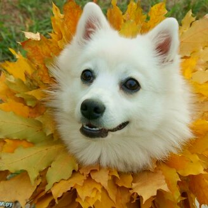 Осенний настрой...