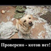 Проверено - котов нет! фото приколы