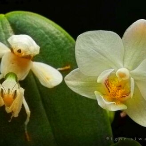 Фото приколы Умелая маскировка в природе (35 фото)