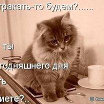 Кошачья котоматрица
