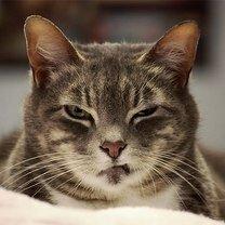 Фото приколы Кошачье недовольство и огорчение (17 фото)