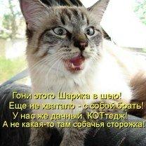 Фото приколы Котоматрица для позитивного настроя (48 фото)