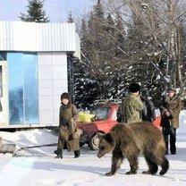 Фото приколы Прикольная ерунда из России (36 фото)