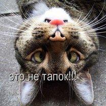 Фото приколы Чудаковатости из котоматрица (22 фото)