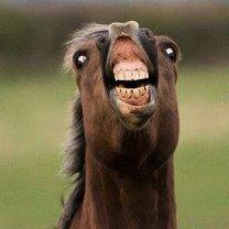 Красивые лошади смешных фото приколов