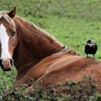 Фото приколы Красивые лошади (13 фото)