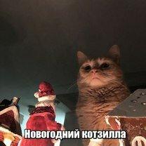 Фото приколы Новогодний котзилла! (46 фото)
