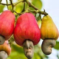 Фото приколы Как растут разные продукты (8 фото)