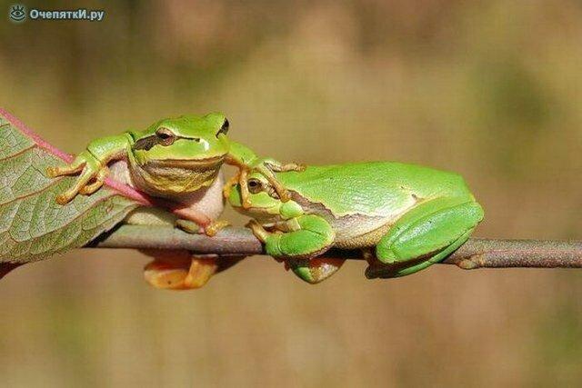 Лягушачьи истории 1