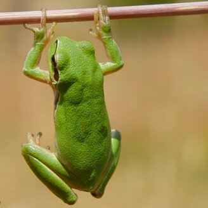 Лягушачьи истории смешных фото приколов