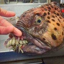 Редкие морские обитатели (23 фото)