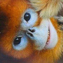 Уникальные и странные животные смешных фото приколов