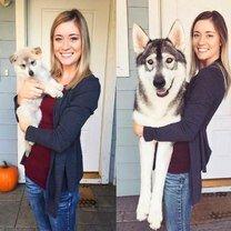 Собаки в прошлом и сейчас фото приколы