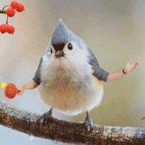 Птицы, у которых выросли руки фото приколы
