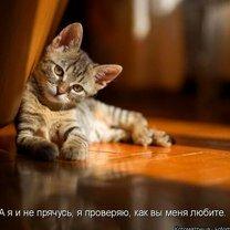 Кошачье зазаборье фото приколы