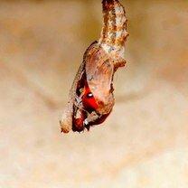 Как рождается бабочка фото приколы