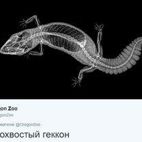 Животные под рентгеном фото приколы