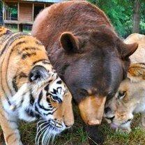 Как дружат животные фото приколы