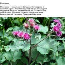Полезные сорняки - что мы о них знаем? фото приколы
