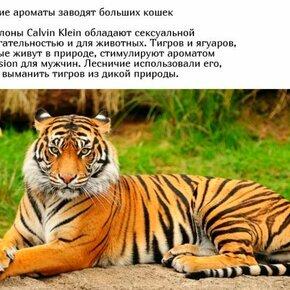 А как это приянто у животных? фото приколы