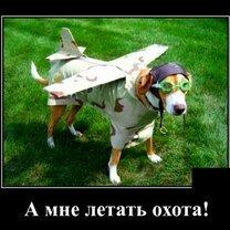А нам летать охота! фото приколы