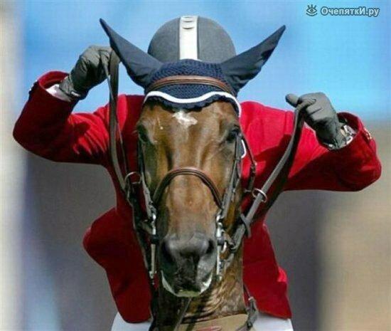 Лошади 20
