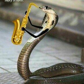 Змеи с руками? фото приколы