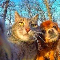 Позитивные животные фото приколы