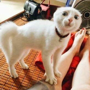 Кот делает, что хочет фото приколы