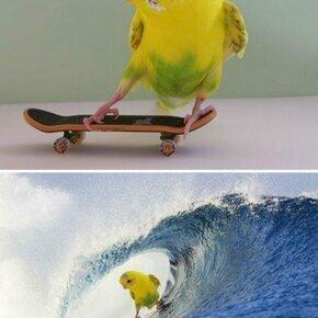 Фотошоп-шедевры из интернета смешных фото приколов