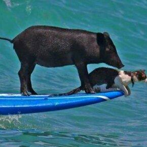 Позитив и задор от животных и детей смешных фото приколов