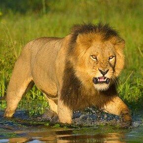 Величие дикой природы фото