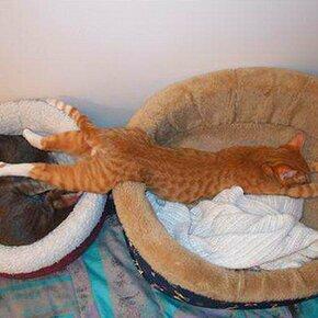 Позы для кошачьего отдыха фото приколы