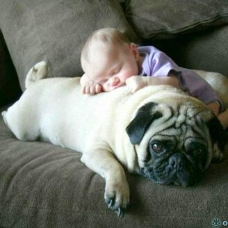 Детки и животинка