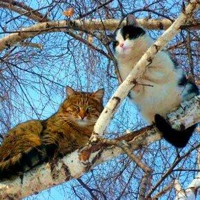 Весенние котики фото приколы