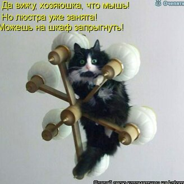 Прикольная котоматрица фото приколы