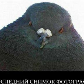 Окунись в йод! фото