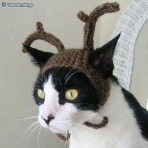 Новогодние котейки фото приколы