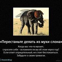 Не делай слона из мухи фото приколы