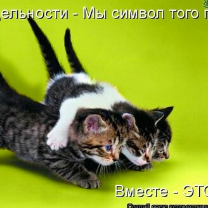 Новогодняя котоматрица смешных фото приколов
