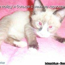 Кошачья матрица смешных фото приколов