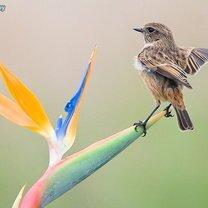В мире птиц смешных фото приколов