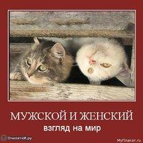 Мудрые слова фото
