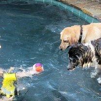 Собаки под водой смешных фото приколов